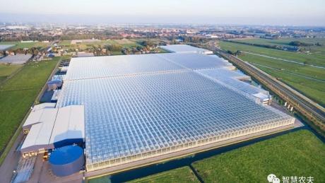 探密荷兰智能温室,看看人家是怎么种菜的