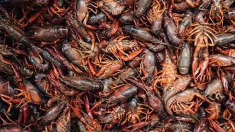 艾永亮:餐饮企业难以长存,打造超级产品的小龙虾成例外