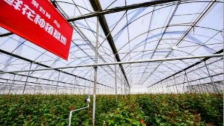 三天卖光千亩顶级玫瑰,聚划算如何将品质性价比做到极致?