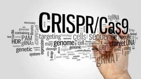当基因编辑遇上艺术家,CRISPR是否还令人害怕?| 硅谷洞察